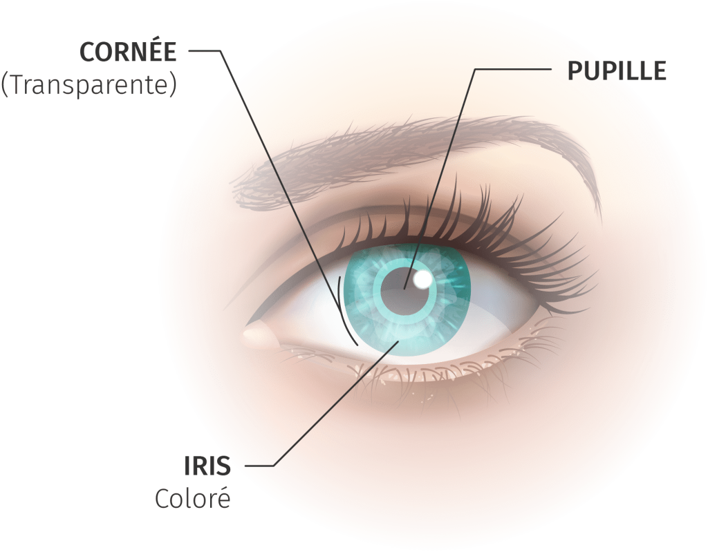Tears role for cornea